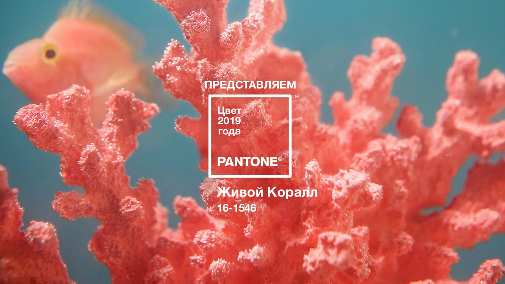 Институт Pantone определил цвет 2019 года