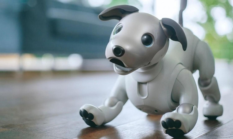 Больше, чем игрушки: домашние роботы2
