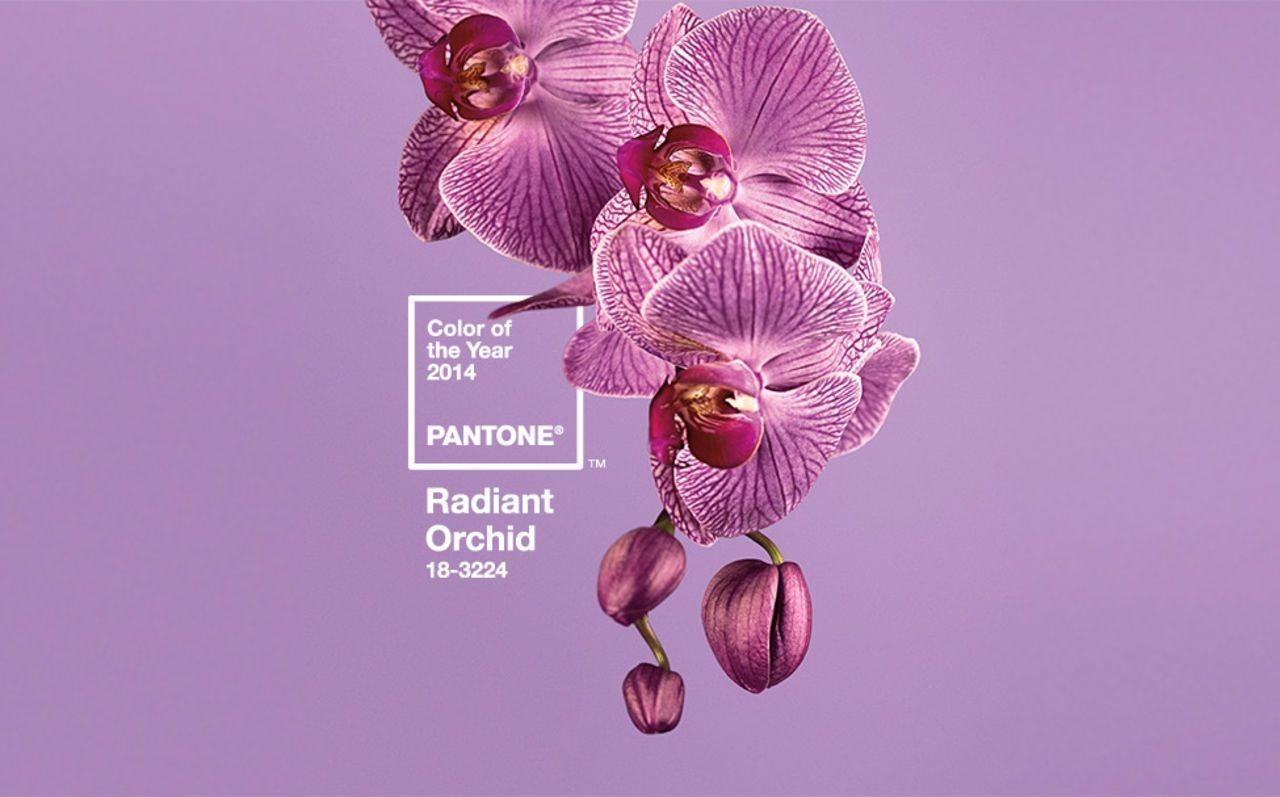 Институт Pantone определил цвет 2019 года5