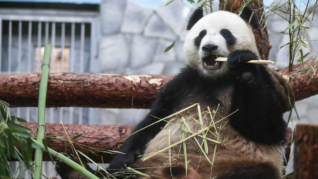 Hikvision передали Московскому зоопарку 20 камер видеонаблюдения