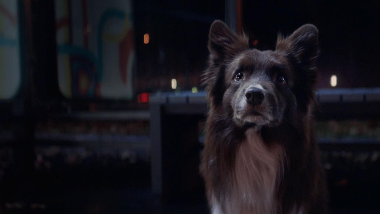 «Яндекс» запускает сервис по поиску потерявшихся домашних животных